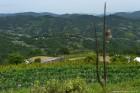 県内唯一の村