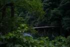 加茂川に架かる名称不明の吊り橋