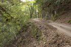 路肩の石積